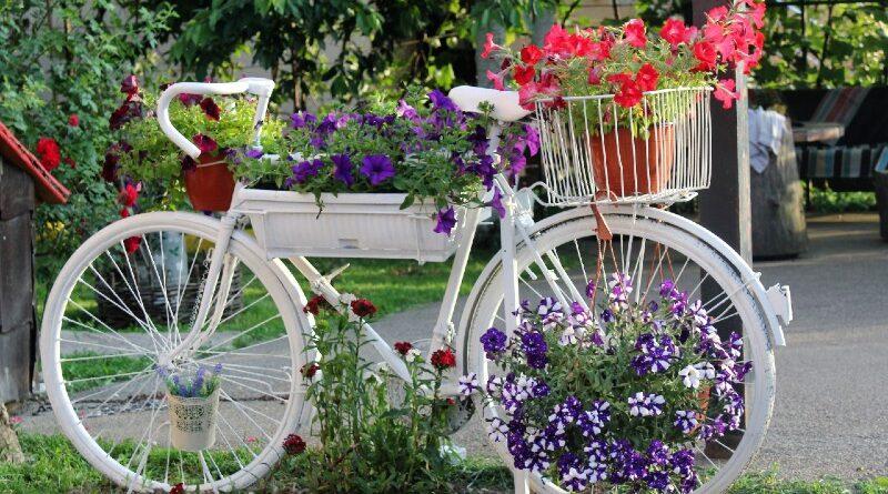 Tražimo najljepše dvorište